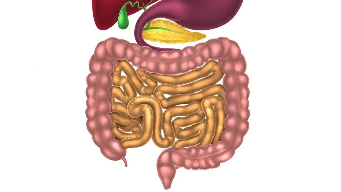 Diagram of small and large intestine, pancreas, gall bladder and base of stomach and liver