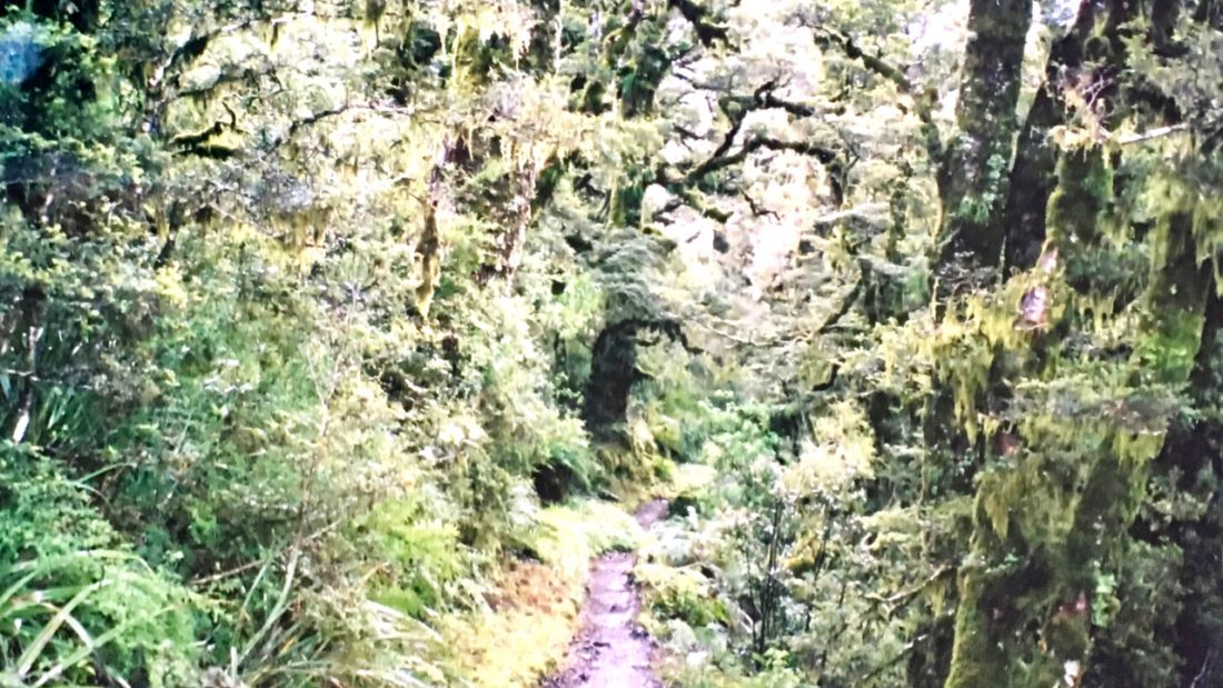 Track through beech forest, Routeburn Track