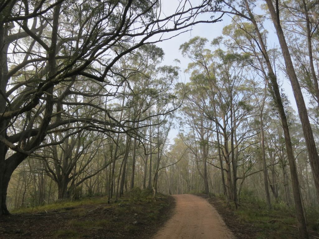 Blue Mountains Nutritionist, Dietition & Mindfulness Practitioner. The Six Foot Track.