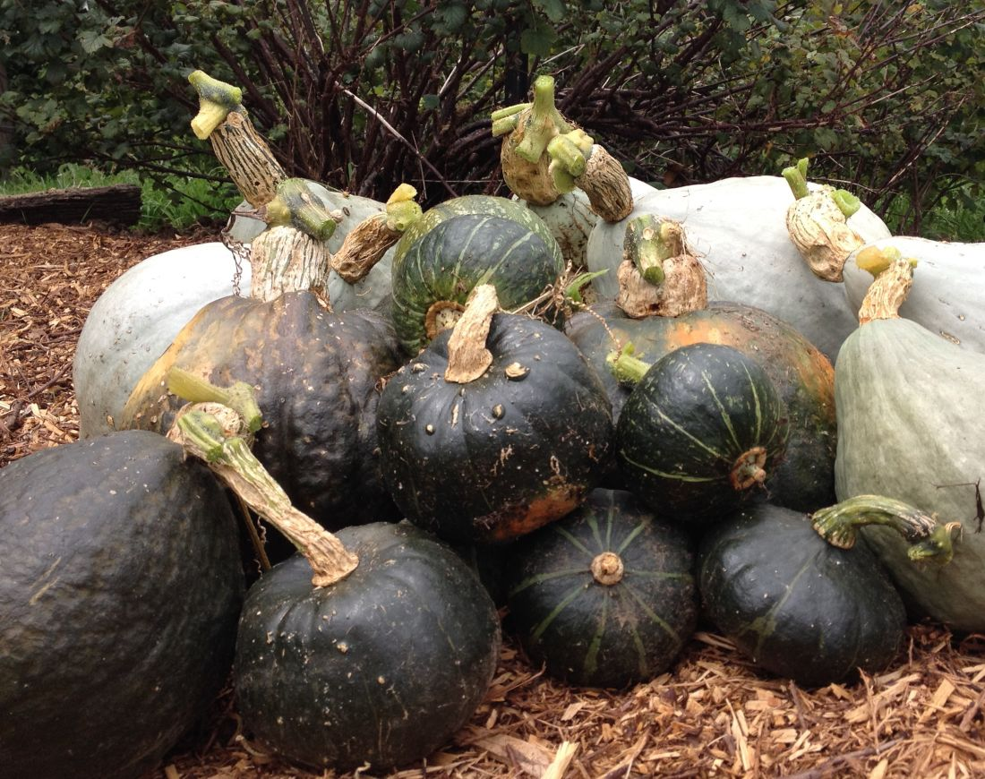 Living with the seasons pumpkin harvest