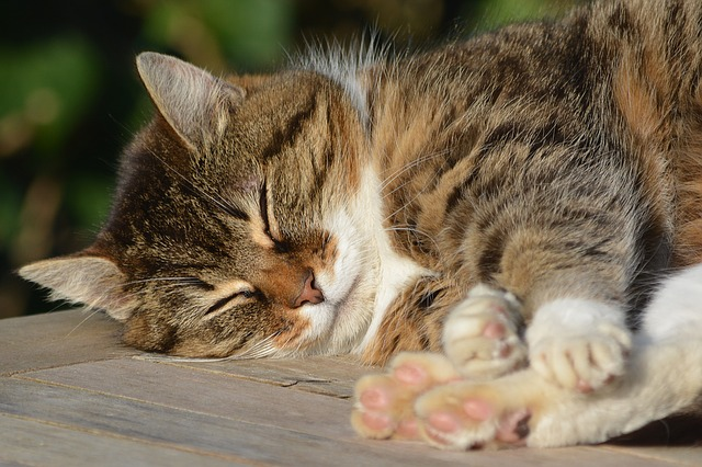 A tabby cat enjoying a nap in the sun