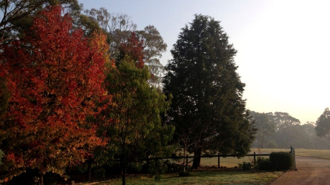 Autumn trees remind us of the benefits of living with the seasons