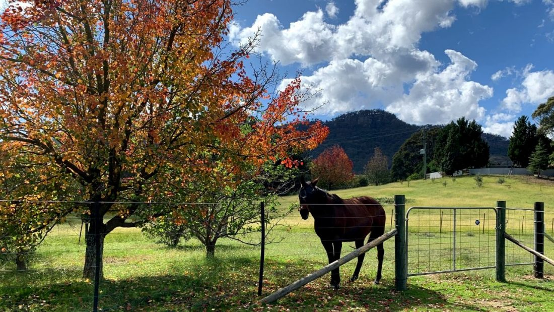 Horses naturally know the benefits of living with the seasons, as Chit Chat stands under an autumn tree