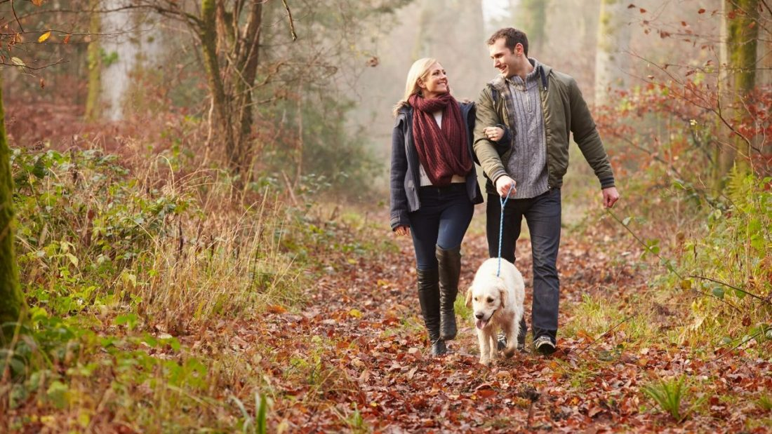 Couple waling their dog in a forest